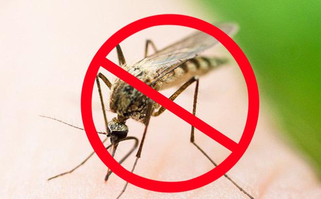 Cách đuổi muỗi